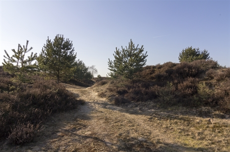 © Sietze Kraak - Grenspoel_Drents-Friese_wold